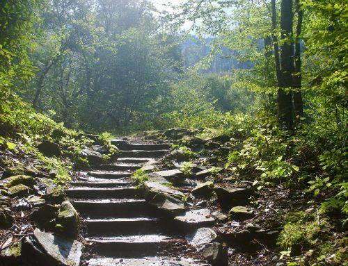 Traumschleifen Saar-Hunsrück-Steig